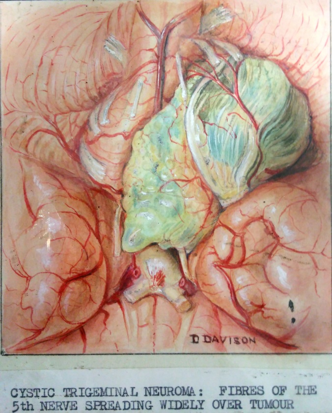 Dorothy Davison – some of the medical artwork forming part of the next cataloguing project